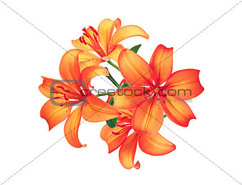 Beautiful red lily flowers isolated on white