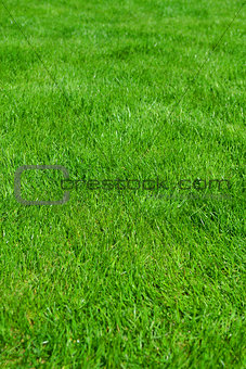 Clean Beautiful Background Green grass.