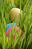 Easter eggs hidden in grass