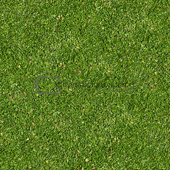 Green Grass. Seamless Tileable Texture.