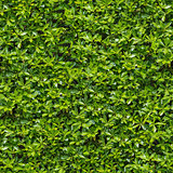 Green Bush. Seamless Tileable Texture.