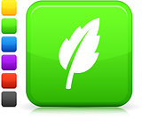 green leaf  icon on square internet button