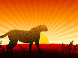 Cheetah on Sunset Background