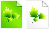 Leaves on Paper set