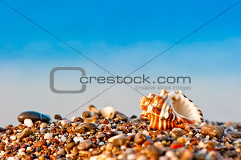 one seashell on a pebble beach on sea background