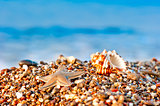seashell and starfish on a pebble beach on sea background