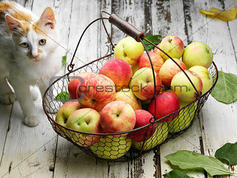 apple basket and cat