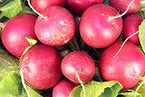 large radish