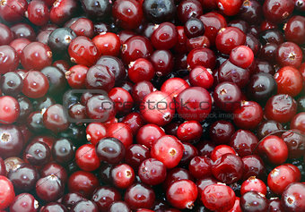 background of red cranberries