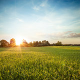Summer Landscape with Green Field at Sunset