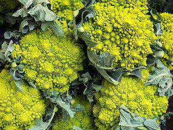 Calabrese green broccoli cabbage