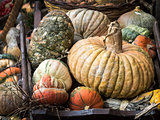 Pumpkins for decoration at Campo dei Fiori, Rome