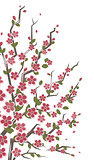Sakura branch. Floral background.