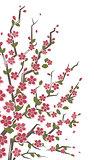 Sakura branch. Floral background.
