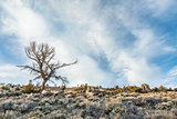 tree, sagebrush and rocks