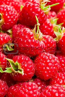 a lot of raspberries