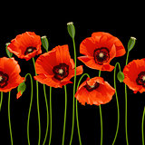 Red poppies in a row on black background.