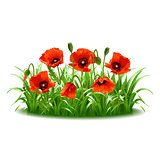 Red poppies in grass.