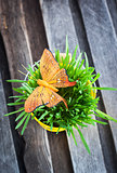 Decorative orange butterfly on fresh green grass