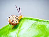 Little snail on green leaf