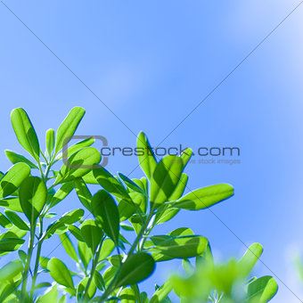 Green tree border