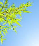 Fresh bamboo leaves border