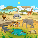 African animals in the nature.