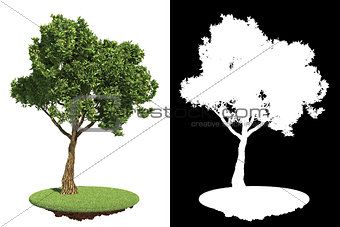Green Garden Tree Isolated on White.