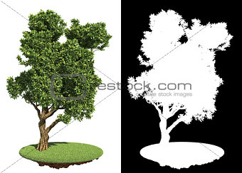 Asymmetric Green Tree Isolated on White.