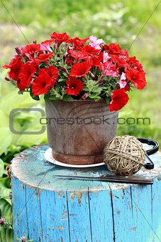 Pottery flower in garden