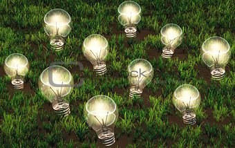 Cultivation of lit light bulbs