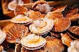 Scallops in the shell in the market