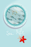 School of fish swimming past a ships porthole