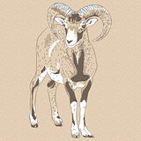 vector closeup portrait of funny Alpine ibex