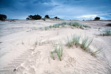 sand texture on dunes by Appelscha