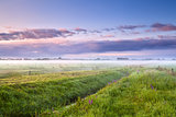 summer misty morning over meadows