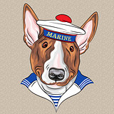 vector funny cartoon hipster dog Bullterrier sailor