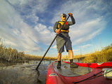 stand up paddling (SUP) in a wetland