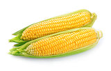 An ear of corn isolated
