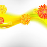 Abstract Background With Color Gerbers Flowers