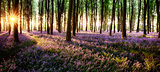 Long shadows in bluebell woods