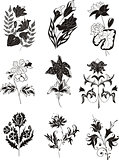 stylized black and white flower designs