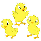 Cartoon Chickens