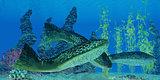 Devonian Drepanaspis Fish