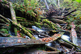 Rain Forest Stream Covered Fallen Logs Woods Jungle Outback Trav