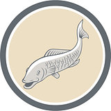 Trout Swimming Cartoon Circle