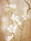 Vintage fine art floral background