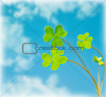Abstract natural background, clover over sky