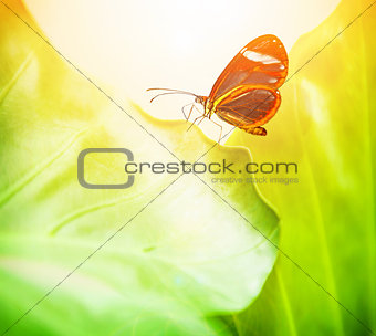 Beautiful butterfly on green leaf