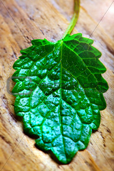 green leaf on natural wooden surface